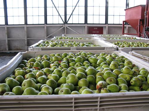 Pears3s