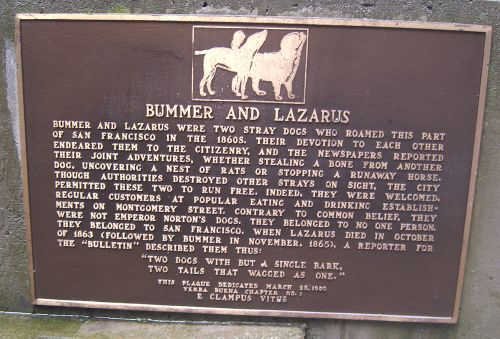 Bummer and lazarusS