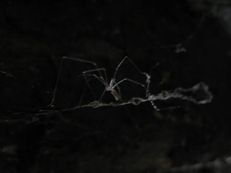Spider giraud cellar2s