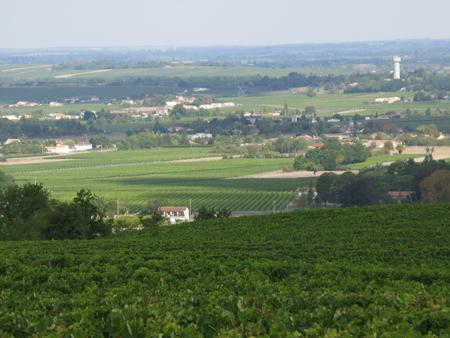 Hennessy vineyard8s