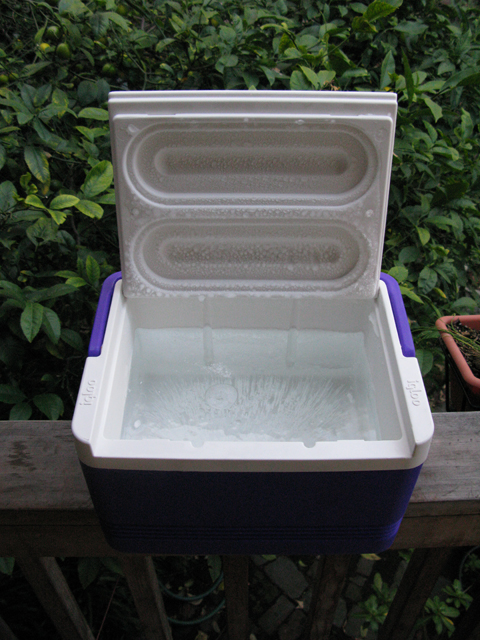 Iceincoolers