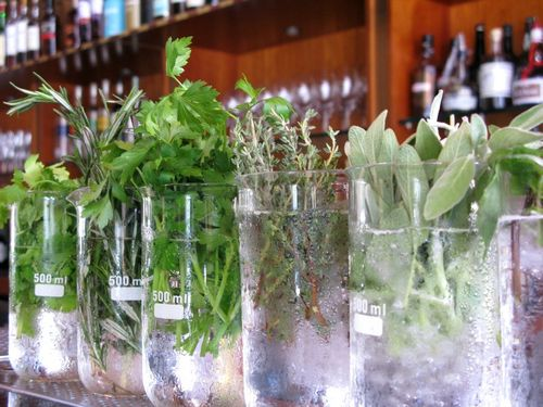Herbs in row of glasses_tn