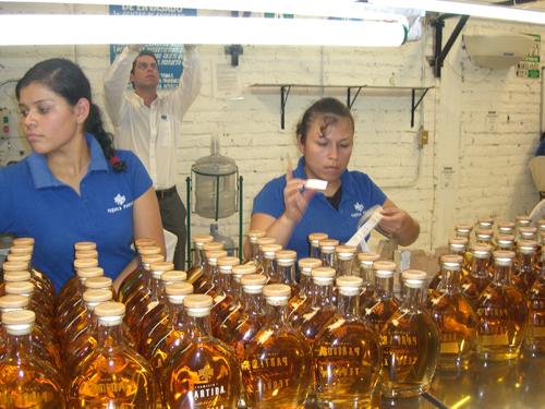 Bottling line at partidas