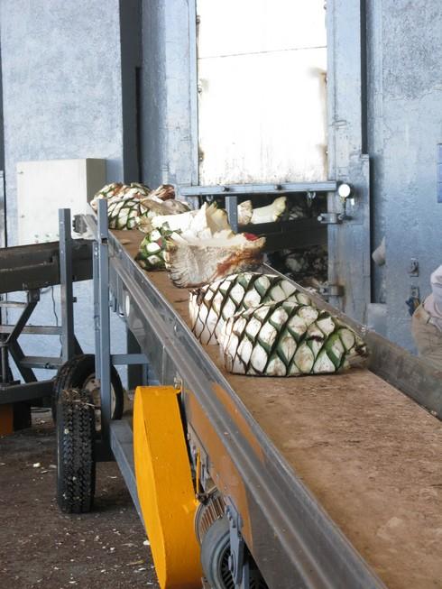 Olmeca altos agave ovens2_tn