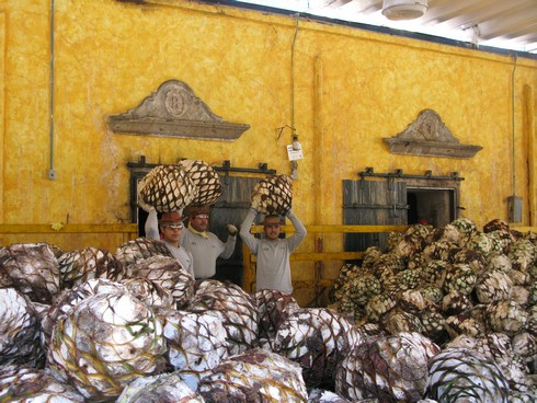Loading agave ovens tequila jose cuervo distillery2_tn