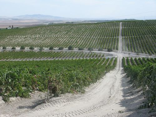 Harveys vineyard 2_tn