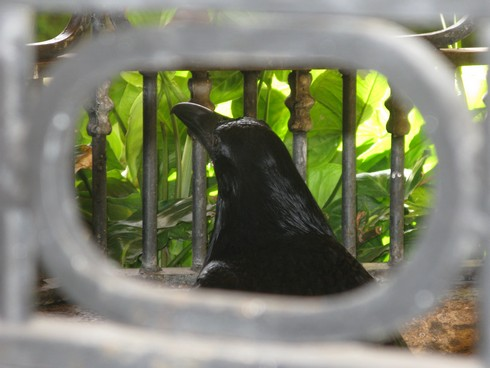 Crow in cage tequila jose cuervo distillery_tn