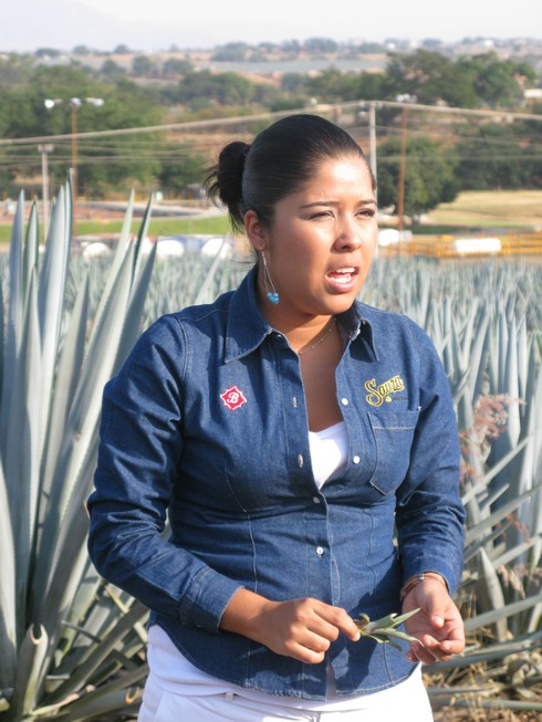 Talk about sprouting sprouted agave tequila sauza agave nursery2_tn