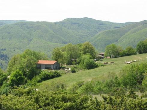 Hills Tuscany Juniper Harvest with Bombay Sapphire_tn