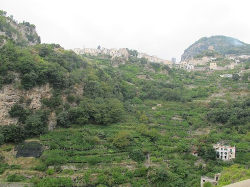 Terraced lemon grove amalfi coast lemon tour_tn