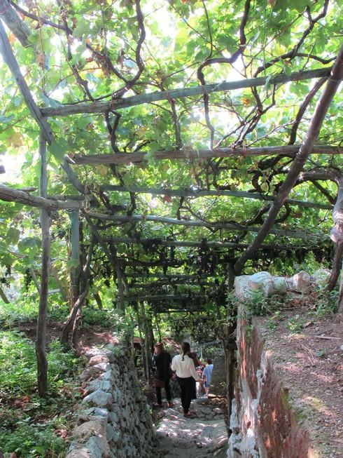 Amalfi coast lemon tour steep stairs_tn