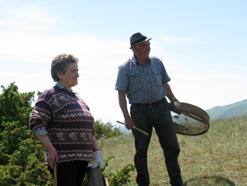 Tuscany Juniper Picking with Bombay Sapphire harvesters2_tn