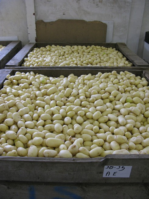 Clean potatoes_tn