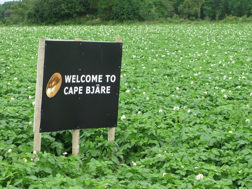 Cap bjare potato fields_tn