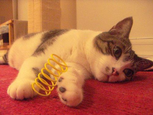 Cat toy1