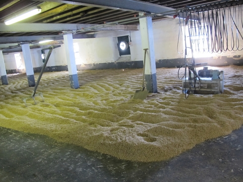 Malting Floor Laphroaig Distillery Islay Scotland _tn