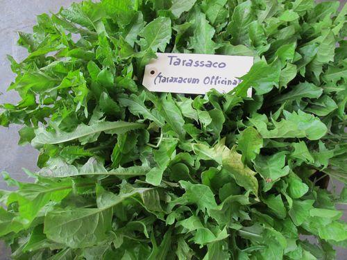 Tarassaco dried