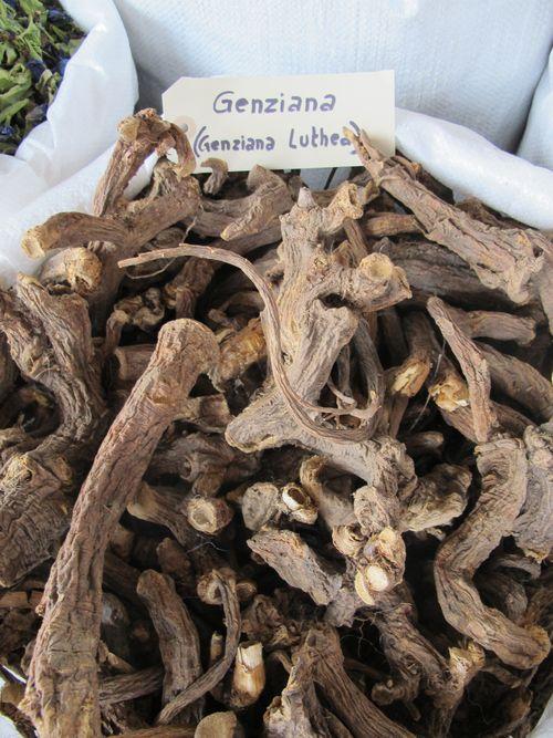 Genzianella dried