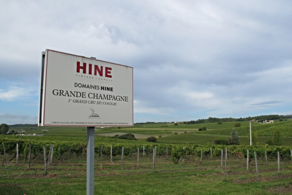 Vineyards for Hine Cognac Grande Champagne8
