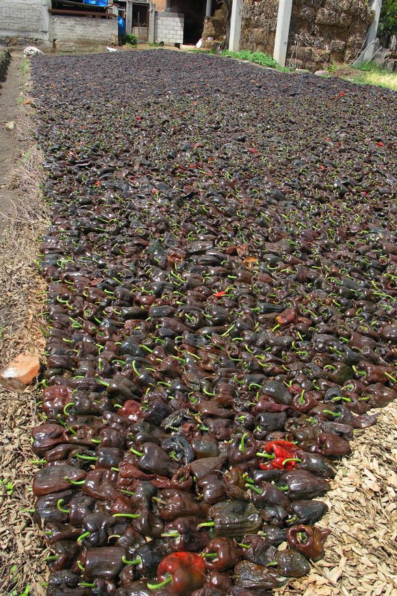 Drying poblano chiles for Ancho Reyes liqueur16