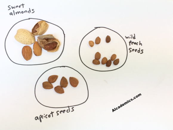The Difference Between Bitter Almonds Sweet Almonds And Stone Fruit Seeds on Parts Of A Seed