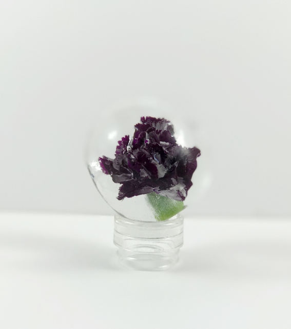 edible flower frozen in ice sphere