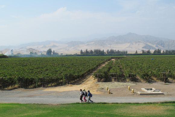 La Caravedo Distillery Pisco Porton Peru workers vineyard