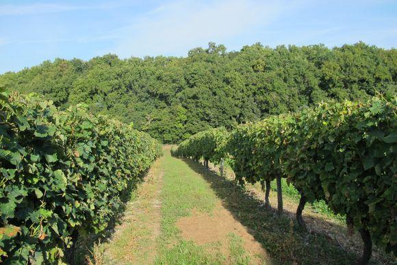 Merlet Winery Cognac France6