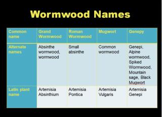Wormwoods