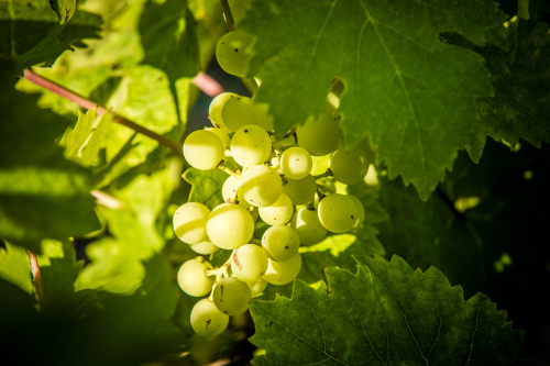 33.-fermeture-de-la-grappe-©CK-Mariot-Photography_0016
