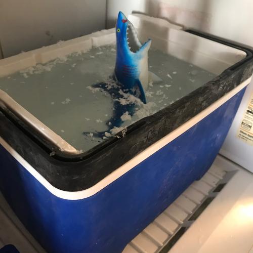 Shark In Ice Block  - 55
